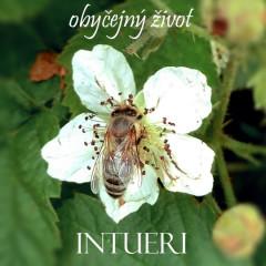 Intueri - Obyčejný život