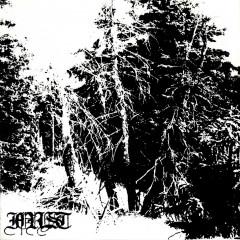 Forest - Boio Haemum